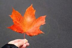 Orange lönnlöv Royaltyfria Bilder