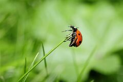 Orange Ladybug on Green Plant Stock Photos