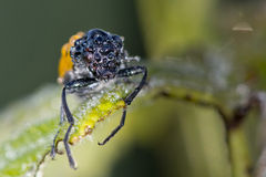 Orange ladybug macro on green background Stock Image