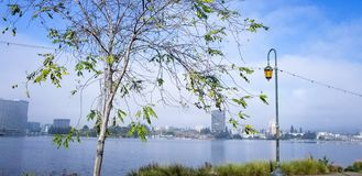An orange lamp makes the tree beatiful. Beautiful tree with gorgeous tree by the lake in Oakland, CA. January 10, 2019 royalty free stock photography