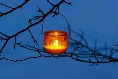 Orange lantern hanging on branch Royalty Free Stock Photos