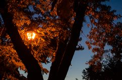 Orange lantern illuminates the leaves of a tree at night stock images