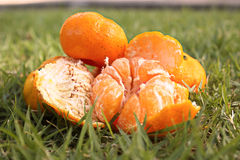 Orange. Laying on the grass in the park Stock Image