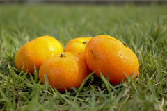 Orange. Laying on the grass in the park Royalty Free Stock Photography