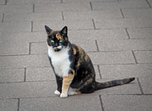 Orange le chat tigré Photos libres de droits