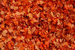 Orange Leaf Background. This fall leaf garland makes a great autumn background Stock Photo