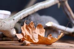 Orange leaf among branches Stock Photo
