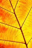 Orange leaf Stock Photo