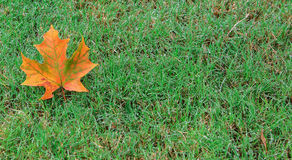 Orange Leaf dew on left Royalty Free Stock Photos