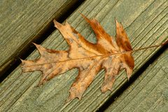 Orange leaf. Early morining   falling wet orange leaves on wet wood Stock Images