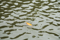 Free Orange Leaf Floating On The Water Surface Wave. Royalty Free Stock Photos - 87579618
