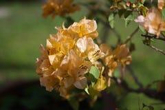 Orange leaf Royalty Free Stock Photo