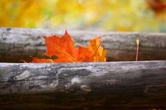 Orange leaf. Orange maple leaf fallen on wood Stock Image