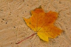 Orange leaf on sand surface. Orange fallen maple leaf lying on the sand Royalty Free Stock Photography