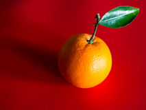 Orange with Leaf on Stalk Royalty Free Stock Photos