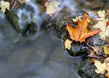 Orange Leaf and Stream Stock Images
