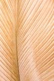 Orange leaf texture Royalty Free Stock Images
