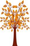 Orange Leaf Tree, Fall Tree, Tree Illustration. Orange leaves, foliage, flora, nature, brown and orange leaves, fall tree, autumn tree, fall illustration Stock Photography