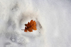 Orange leaf in white snow. Orange leaf lies in white snow, close-up Royalty Free Stock Image