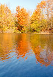 Orange leafed tree and reflections Stock Photography