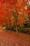Orange Leafed Trees on Pathway Stock Photos