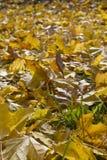 Orange leafs Royalty Free Stock Photos