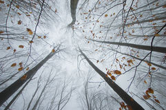 Orange leafs på treefilialer i höstskog Arkivfoton