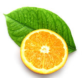 Orange and leave with drops Stock Image