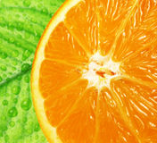 Orange and leave with drops macro Stock Image