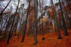 Orange Leave Trees Royalty Free Stock Photo