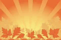 Orange leaves Royalty Free Stock Images