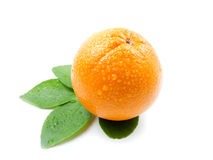 Orange with leaves. Orange fruit with leaves on white background stock photos