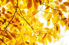 Orange leaves Royalty Free Stock Images