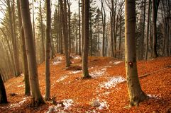 Orange leaves. Forrest covered with orange leaves and bits of snow stock photos