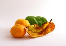 Orange. With leaves autamn on wite background Royalty Free Stock Photos