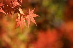 Orange leaves background Stock Photography
