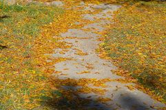 Orange leaves blanketing the ground Royalty Free Stock Photography