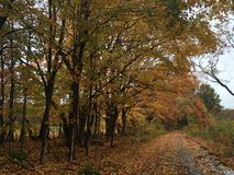 Orange leaves on bumpy road. Fall time scene Royalty Free Stock Image