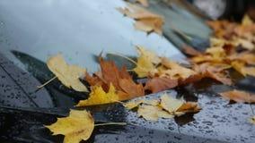 Orange leaves on classy black car. Concept success urban autumn business stock video footage