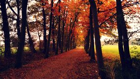 Orange Leaves Covered Pathway Between Trees during Daytime Royalty Free Stock Photo