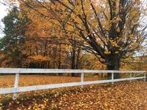 Orange leaves. Fall trees and fence Royalty Free Stock Image