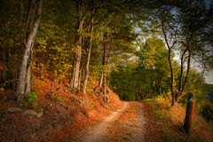 Autumnal forest environment Royalty Free Stock Photo