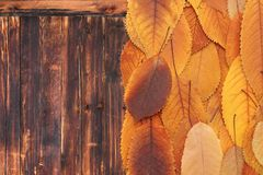 Orange leaves on old wooden table Royalty Free Stock Photography
