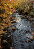 Orange Leaves Over Cataloochee Creek Royalty Free Stock Image