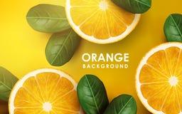 Orange and leaves vector illustration