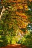Orange leaves and sunshine stock photo