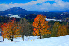Orange leaves trees with first snow durring autumn. Morning view with snow after sunrise,  orange landscape, Jetrichovice Bohemian Royalty Free Stock Images