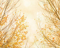 Orange leaves twinkling in the sky. Stock Photo