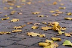 Orange leaves on walking road at late autumn. Leaf fall season. Leaves on the pavement stock photos