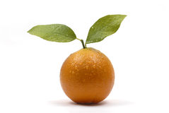 Orange fruit with leaves and water drops isolated on white background Stock Images
